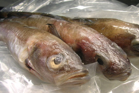 Fencebay Farm Shop - Cod