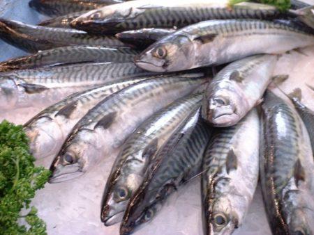 Fencebay Farm Shop - Mackerel