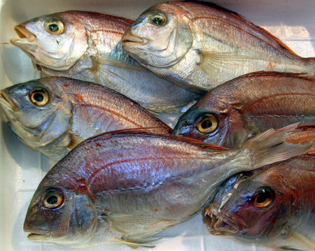 Fencebay Farm Shop - Sea Bream_1000