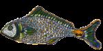 Fencebay fish